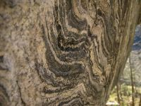Granitni godovi